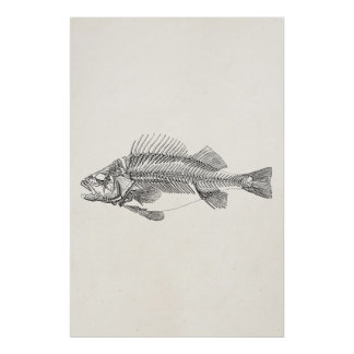 Vintage Perch Fish Skeleton - Fishes Template Poster