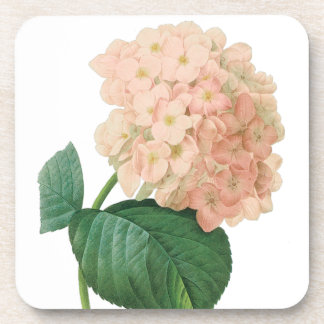 Vintage Pink Hydrangea Hortensia Flower by Redoute Coaster