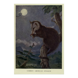 Vintage Possum Painting (1909) Poster