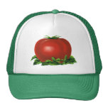 Vintage Red Ripe Tomato, Food Fruits Vegetables Cap