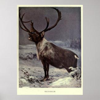 Vintage Reindeer Painting (1909) Poster