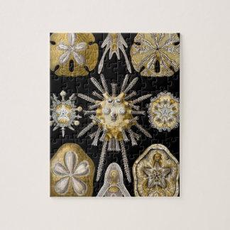Vintage Sand Dollars Sea Urchins by Ernst Haeckel Jigsaw Puzzle