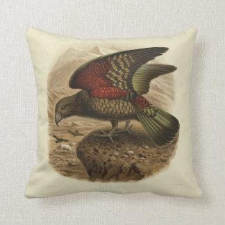 Vintage Science NZ Birds - Kea Square Cushion
