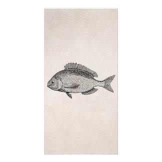 Vintage Sea Bream Fish Retro Fishes Template Photo Cards