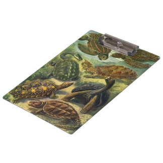 Vintage Sea Turtles and Tortoises by Ernst Haeckel Clipboard