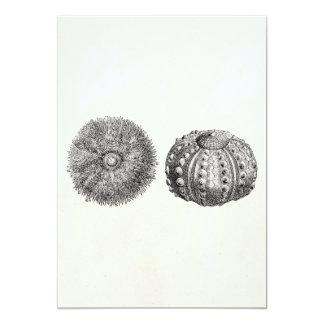 Vintage Spiny Sea Urchin Antique Template 13 Cm X 18 Cm Invitation Card