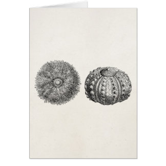 Vintage Spiny Sea Urchin Antique Template Greeting Card