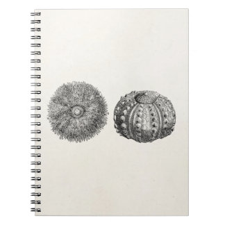 Vintage Spiny Sea Urchin Antique Template Notebooks