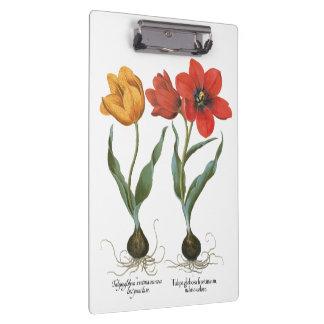 Vintage Spring Tulip Flowers by Basilius Besler Clipboard