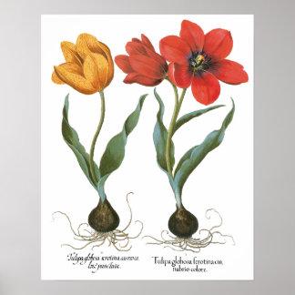Vintage Spring Tulip Flowers by Basilius Besler Poster