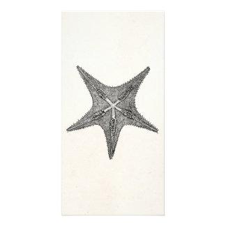 Vintage Starfish Antique Star Fish Template