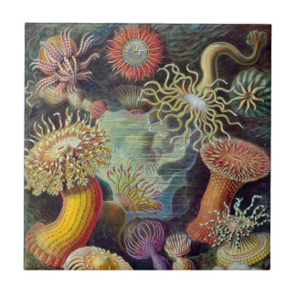 Vintage Underwater Sea Anemones by Ernst Haeckel Small Square Tile