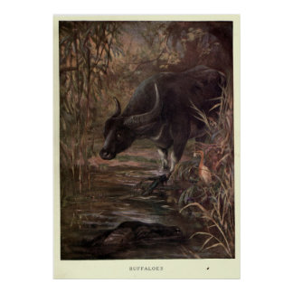 Vintage Water Buffalo Painting (1909) Poster