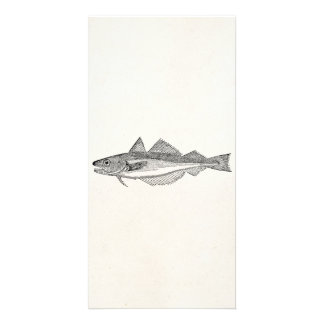 Vintage Whiting Fish - Aquatic Fishes Template