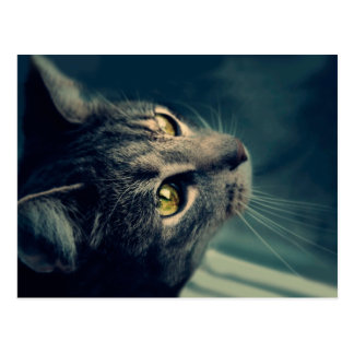 Vintage Yellow-Eyed Cat looking up Above Postcard