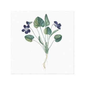 Viola botanical canvas