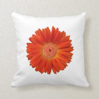 Vivid Bright Orange Gerbera Daisy on White Pillow
