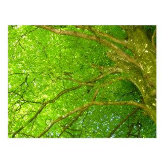 Vivid green tree with sun peeking through postcard