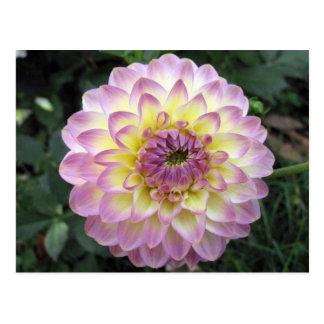 Vivid Lavender Creme Dahlia Postcard