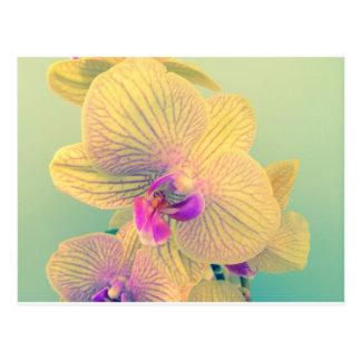 Vivid orchid postcard