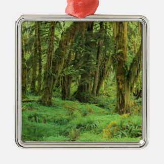 WA, Olympic NP, Quinault Rain Forest, moss Christmas Ornament