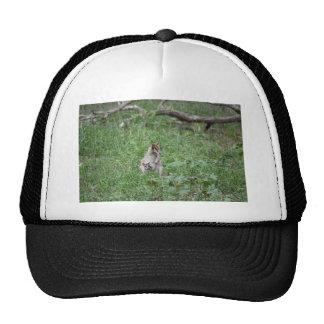 WALLABY AND JOEY RURAL QUEENSLAND AUSTRALIA CAP