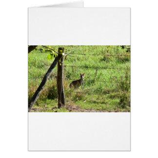 WALLABY EATING GRASS RURAL AUSTRALIA CARD