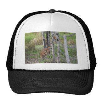 WALLABY RURAL QUEENSLAND AUSTRALIA CAP