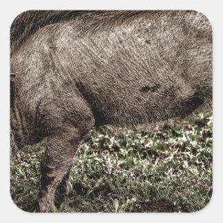 Warthog. Square Sticker