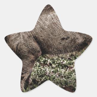 Warthog. Star Sticker