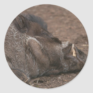 Warty Hog Classic Round Sticker