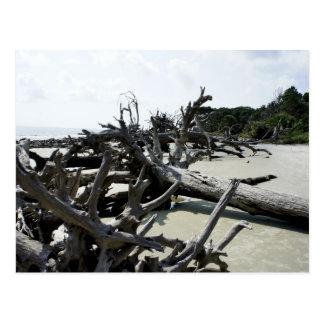 Washed Ashore Postcard