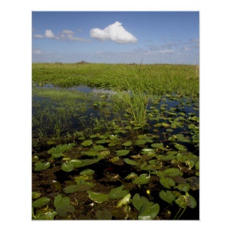 Water lilies and sawgrass in Florida everglades Poster