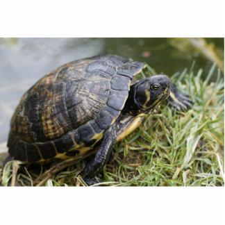 Water Turtle Photo Cutout
