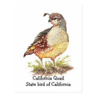 Watercolor California Quail State bird Postcard