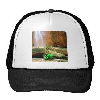 Waterfall Berry Big Basin Redwoods State Park Mesh Hats