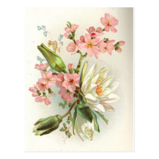 waterlily postcard