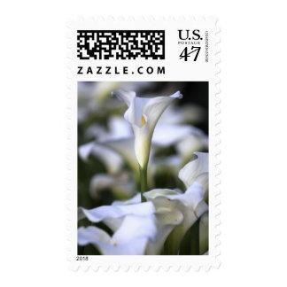Wedding Calla Lilies Postage