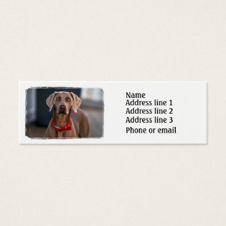 Weimaraner Business Card
