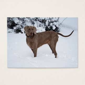 Weimaraner In Winter Business Card