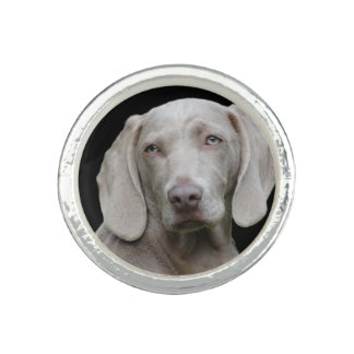 Weimaraner Silver Grey Ring