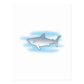 weisser Hai white shark Postkarten