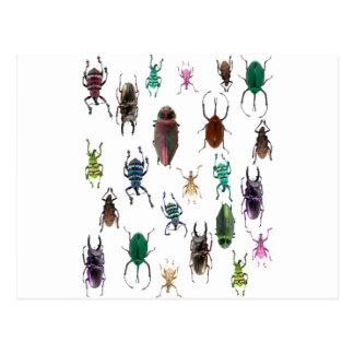 Wellcoda Beetle Type Habitat Insect Life Postcard