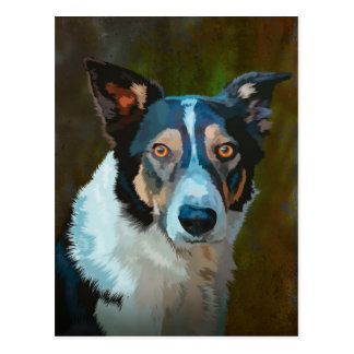 Welsh Border Collie Postcard