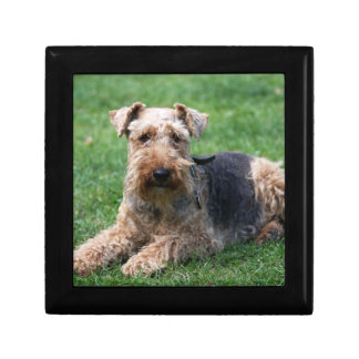 Welsh terrier dog gift box jewelry box trinket box
