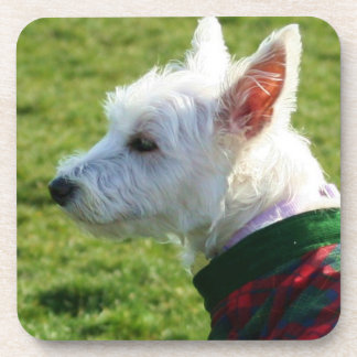 West Highland White Terrier Coaster