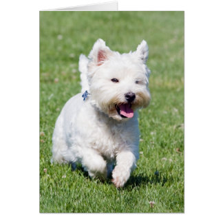 West Highland White Terrier, westie dog cute photo Stationery Note Card