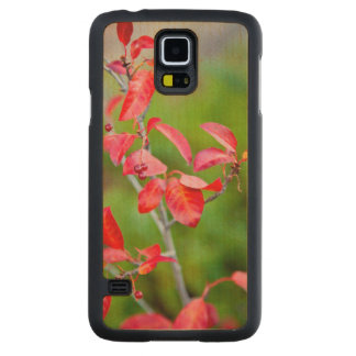 Western Choke Cherry (Prunus Virginiana) In Fall Carved Maple Galaxy S5 Case