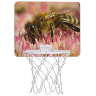 Western Honey Bee Macro Mini Basketball Hoop