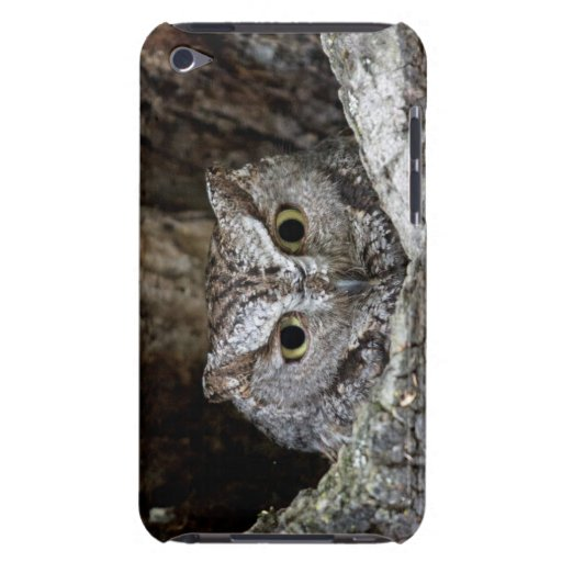 Western Screech Owl Barely There iPod Cases